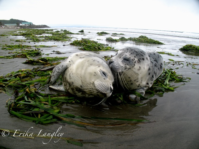 Baby seals at Washaway Beach